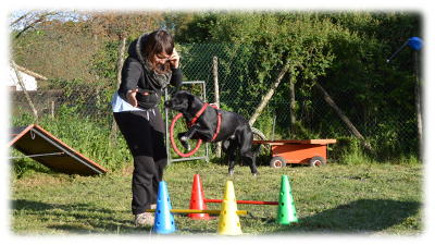 Allenamento di gruppo  di Cross-Training Dog a Roma
