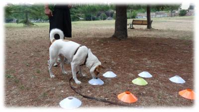 Perché Il Mio Cane Non Torna Al Richiamo